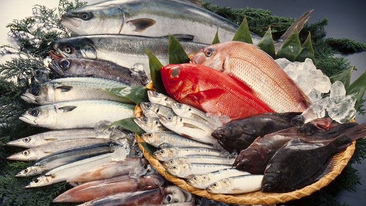 Import Export Seafood